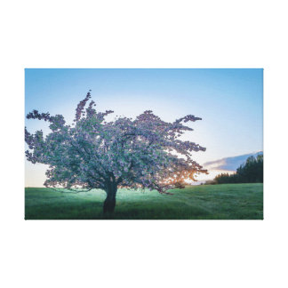 Toile Lever de soleil de printemps, arbre fleuri à