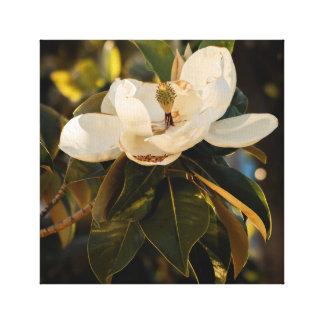 Toile Magnolia