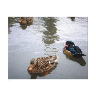Toile Mallard et canards en bois dans un étang - copie