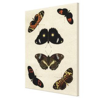Toile Mélange coloré de papillon sur l'arrière - plan
