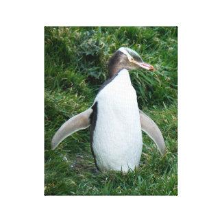 Toile mise en danger de pingouin observée par