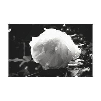 Toile monochrome de fleur