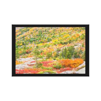 Toile Montagne de Cadillac dans l'automne, parc national