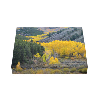 Toile Mountain View pittoresque du Colorado