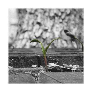 Toile Noir et blanc : Plante en fente de trottoir