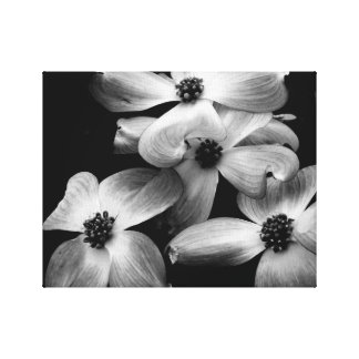 Toile noire et blanche de fleur de cornouiller