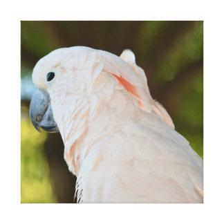 Toile Oiseau