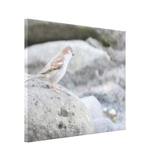 Toile Oiseau sur des roches