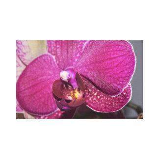 Toile Orchidée pourpre