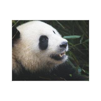 Toile Panda géant dans la forêt en bambou