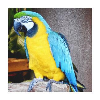 Toile Perroquet bleu