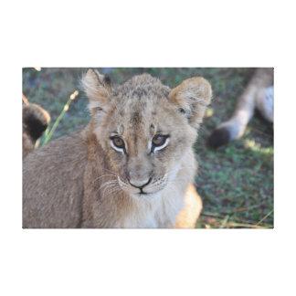 Toile Petit animal de lion regardant vers le haut