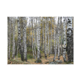 Toile Photo d'automne de Forrest de bouleau simple