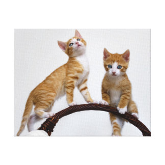 Toile Photo drôle de gymnase de bébé de chatons mignons