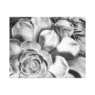 Toile Photo noire et blanche de succulent