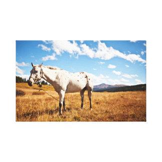 Toile Photographie animale du troupeau   de cheval