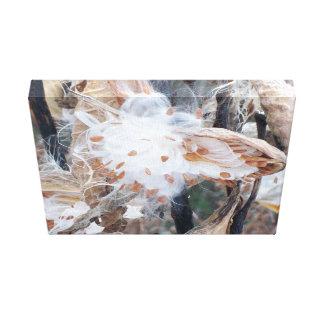 Toile Photographie de fleur de cosse de graine sur la