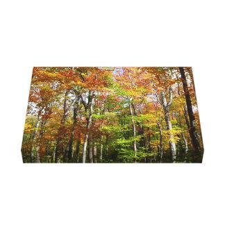 Toile Photographie de paysage d'automne de la forêt II