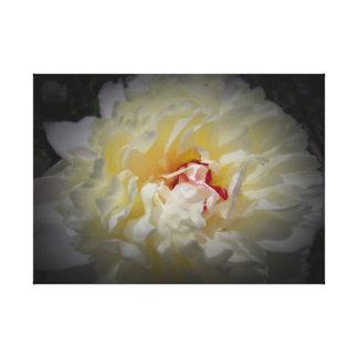Toile Pivoine blanche avec l'arrière - plan noir sur la