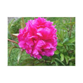 Toile Pivoine rose rayonnante