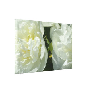 Toile Pivoines blanches