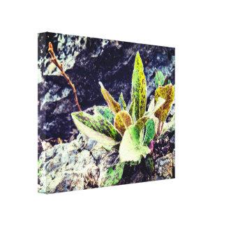 Toile Plante coloré mignon sur la roche