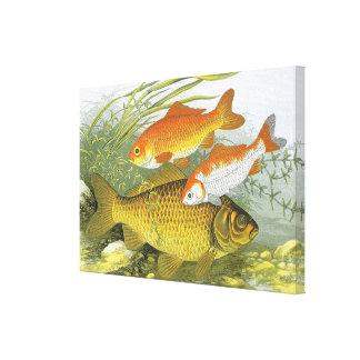 Toile Poissons aquatiques vintages de Koi de poisson
