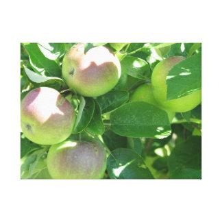 Toile Pommes la Nouvelle-Écosse de vallée
