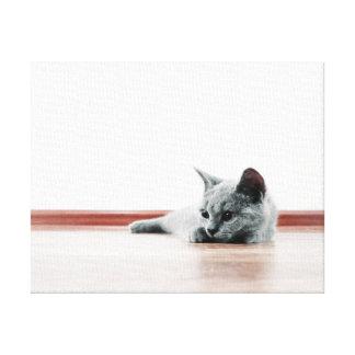 Toile Portrait MIGNON SUPERBE de chaton - chat de pli