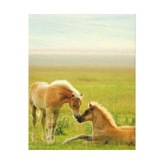 Toile Poulains de cheval