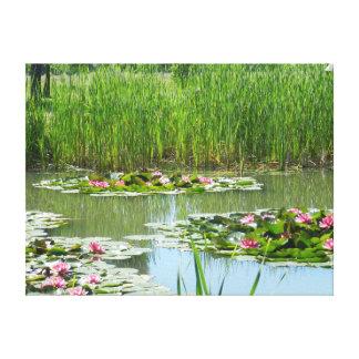Toile protections de lis sur un lac