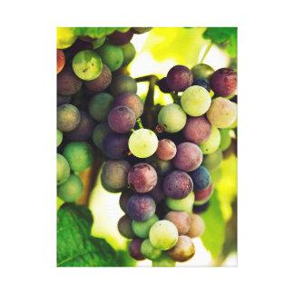 Toile Raisins merveilleux de vigne, automne Sun