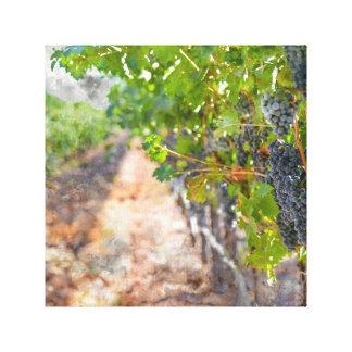 Toile Raisins sur la vigne dans Napa Valley la