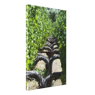 Toile Rangée de vignoble de Napa Valley des raisins