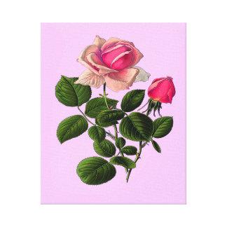 Toile Roses de thé rose