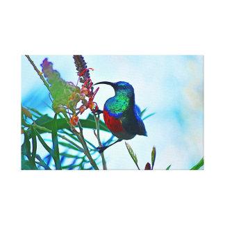 Toile Rubis de colibri throated