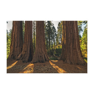 Toile Séquoia Giants