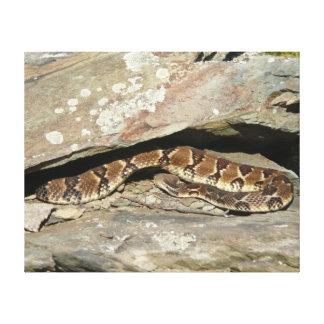 Toile Serpent à sonnettes au parc national de Shenandoah