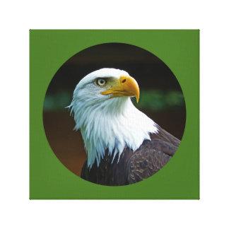 Toile Tête 001 d'Eagle chauve 02,6 rd