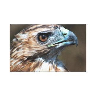 Toile Tête de faucon