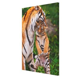 Toile Tigre CUB