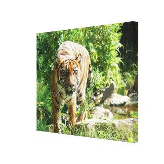 Toile Tigre de Sumatran