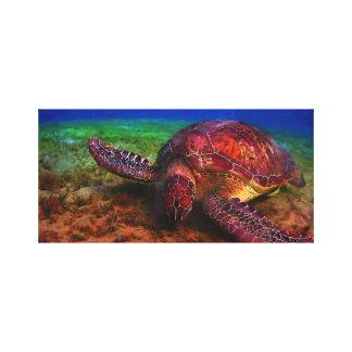 Toile Tortue de mer solitaire