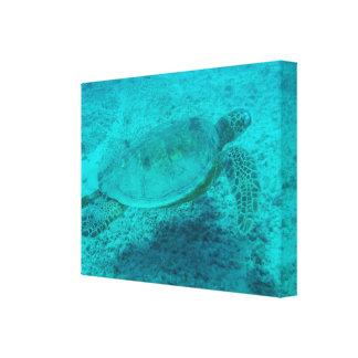 Toile Tortue de mer verte hawaïenne