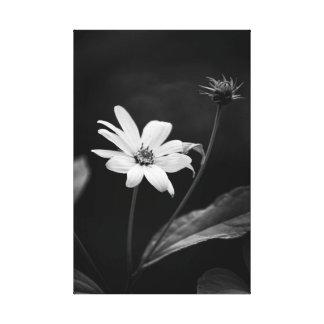 Toile Tournesol faux de Heliopsis noir et blanc