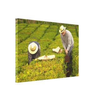 Toile Travail dans les jardins de thé