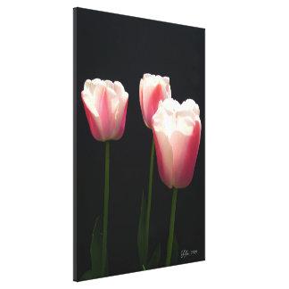 Toile Trois fleurs roses de tulipe