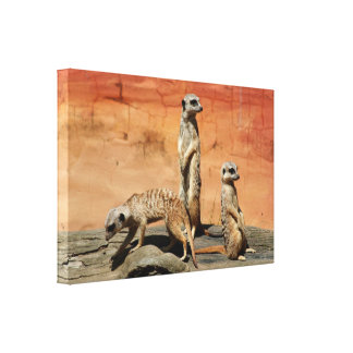 Toile Trois meerkats africains au zoo
