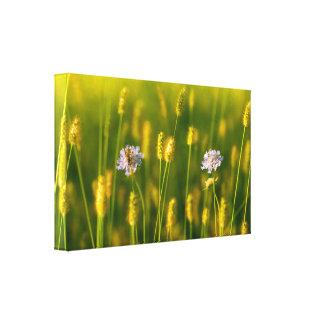 Toile Une abeille sur les fleurs sauvages de ressort