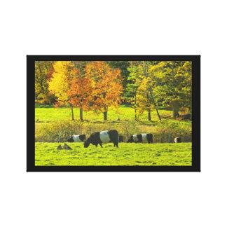 Toile Vaches ceinturées à Galloway à la ferme de